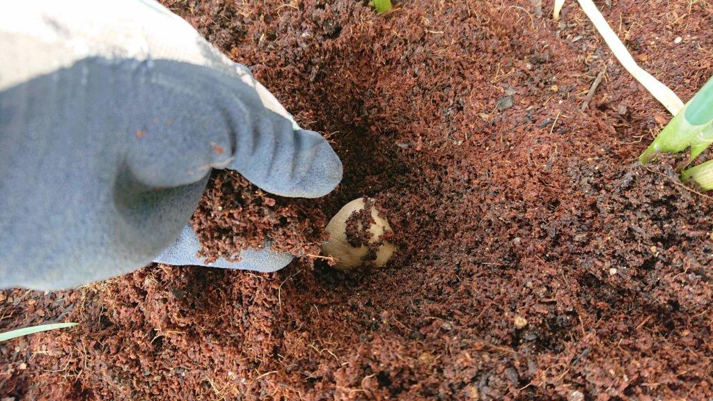 土をふわっと被せる
