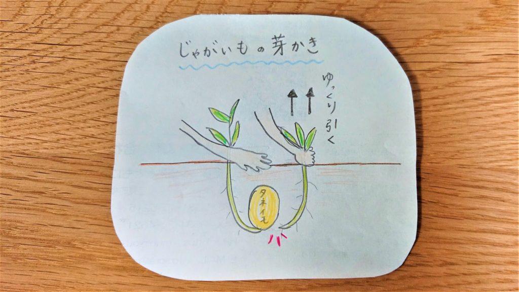芽かきの仕方