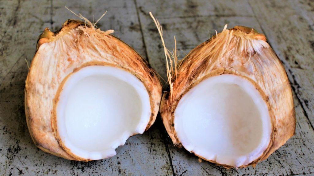 ココナッツ ココヤシ