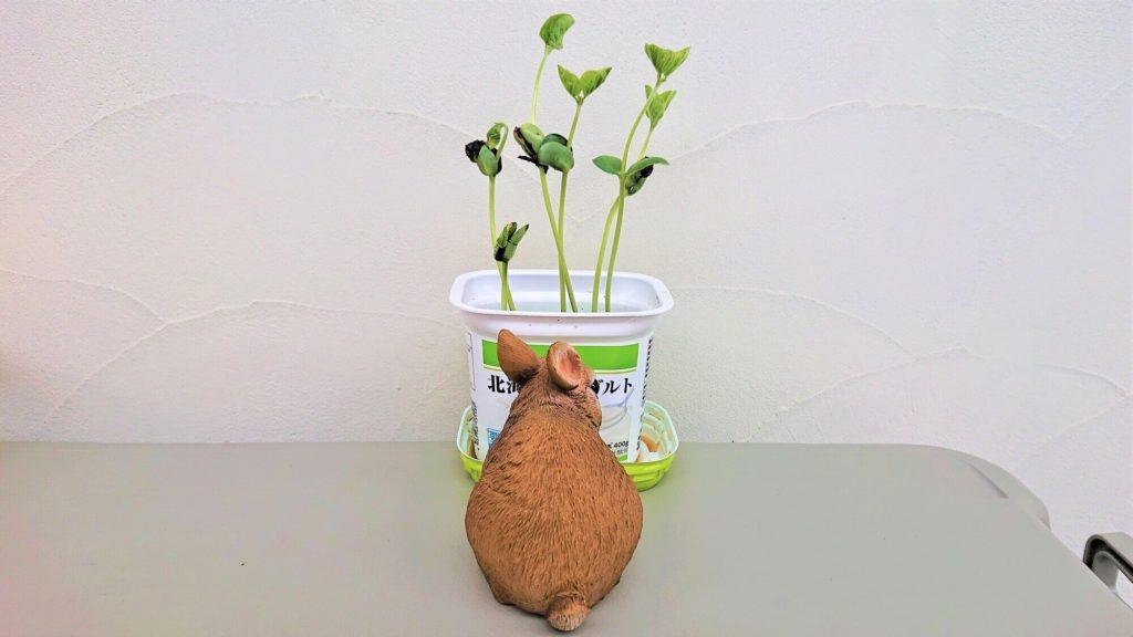 枝豆を見守る