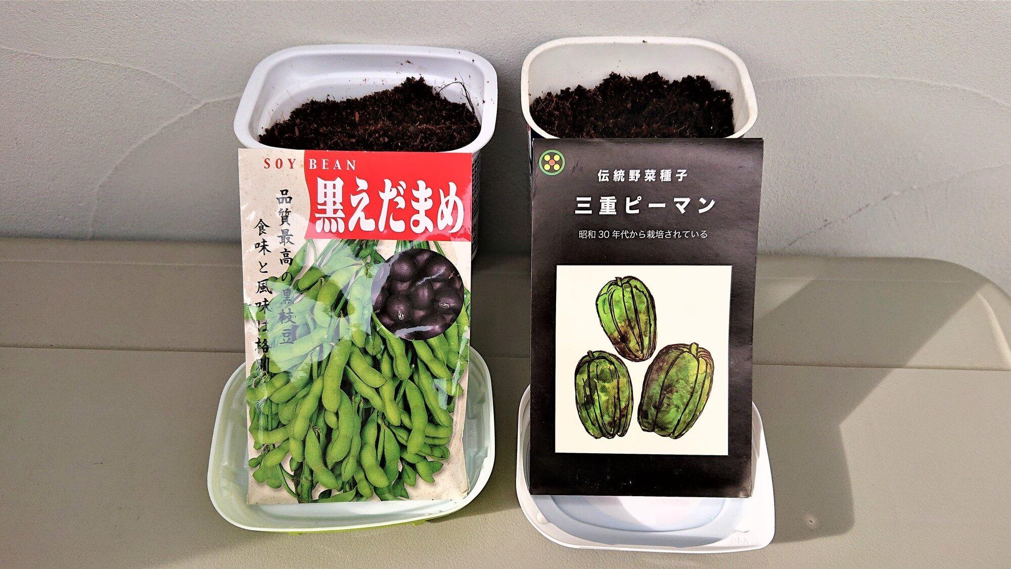 枝豆 ピーマン 種まき