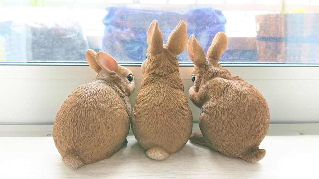 ウサギ ガーデニング