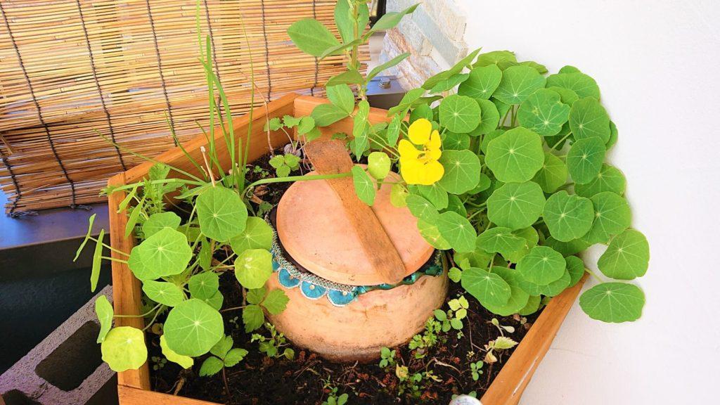 空豆の栽培方法