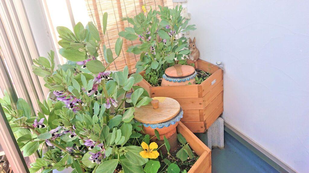 菜の花 そら豆の花